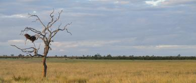 Grassy plain, Kruger National Park