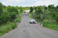 Road in Kruger National Park