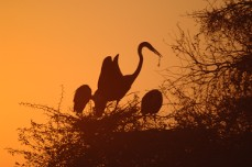 Kruger National Park birds at sunset