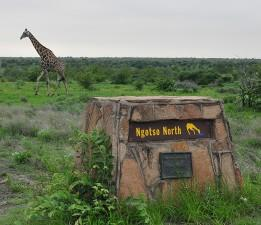 Ngotso North Waterhole
