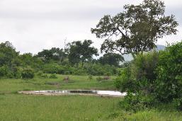 Kruger National Park ecosystem