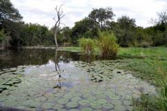 Lake Panic Bird Hide, Kruger National Park
