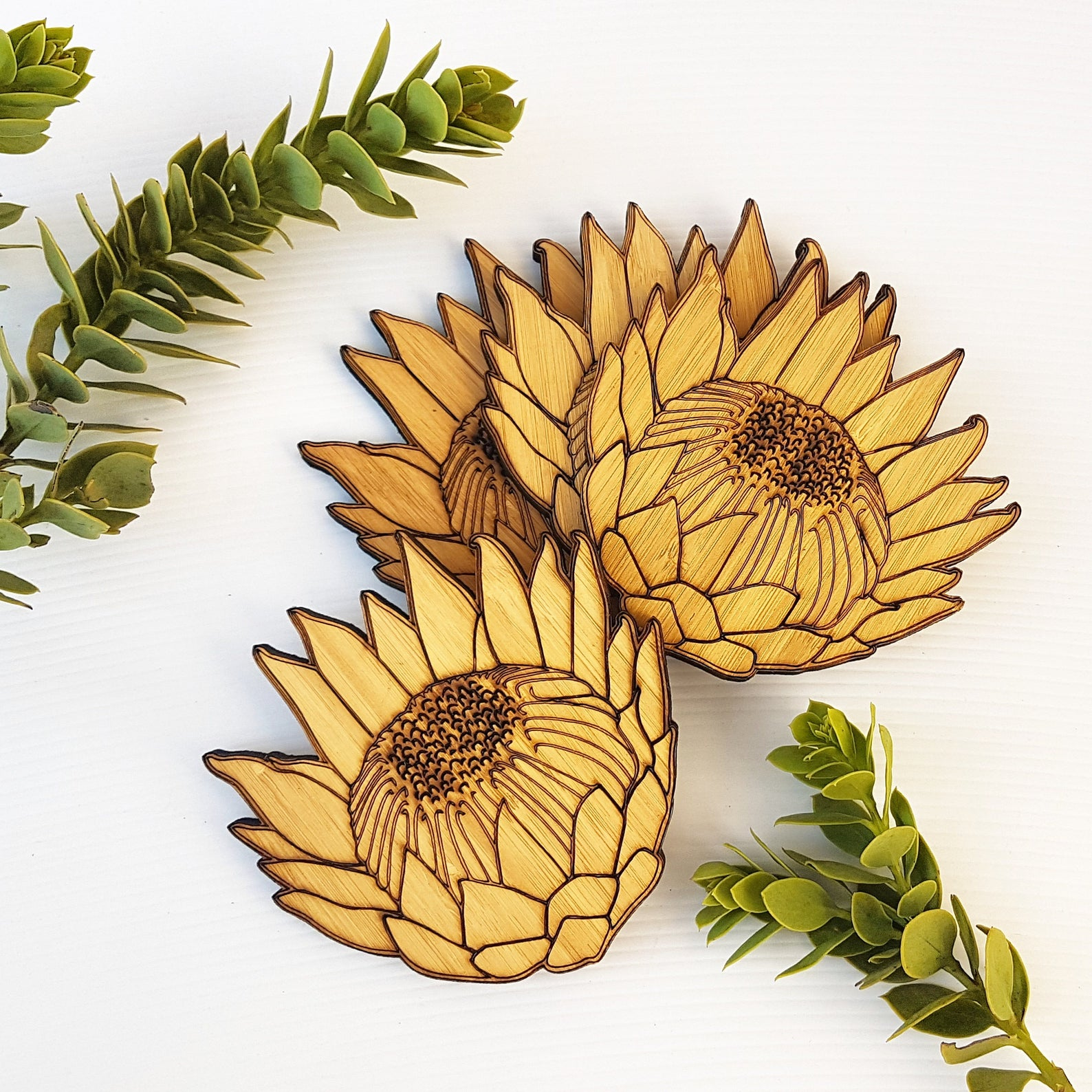 Hallo Jane king protea coasters